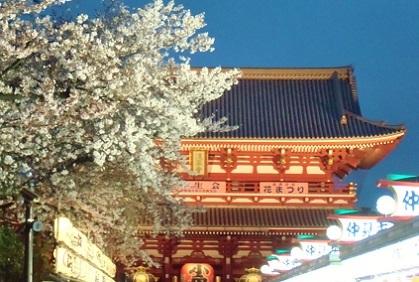 浅草寺 夜桜2