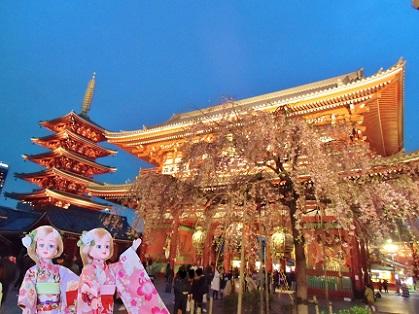 浅草寺 夜のしだれ桜3