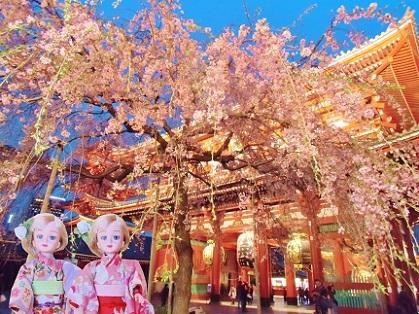 浅草寺 夜のしだれ桜