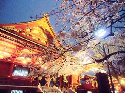 浅草寺 夜桜10