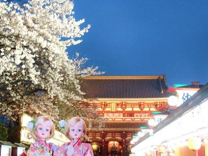 浅草寺 夜桜3