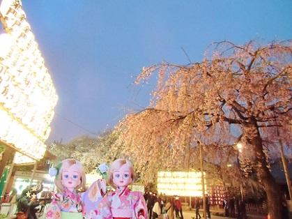 浅草寺の夜桜と提灯