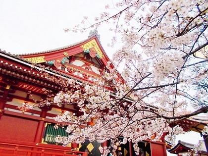 浅草寺の本殿と桜