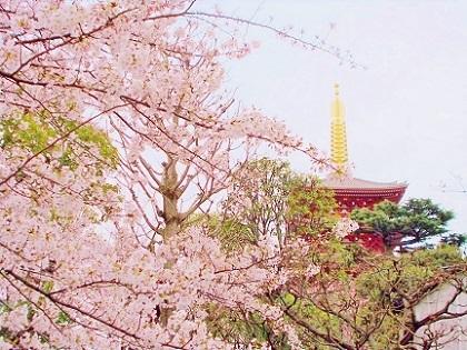 浅草寺の五重塔と桜