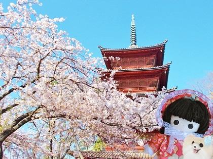 お寺の桜4