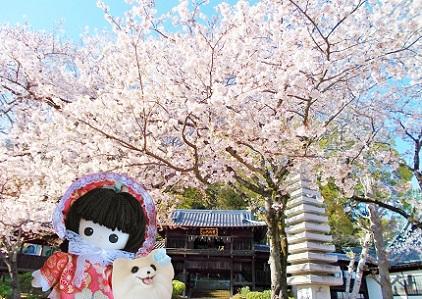 お寺の桜5