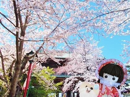 お寺の桜3