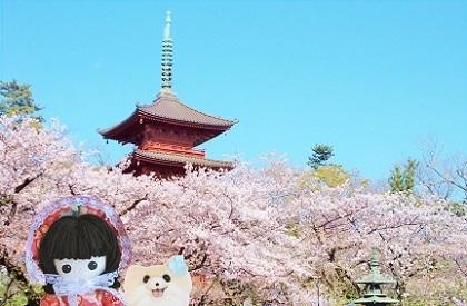 お寺の桜8
