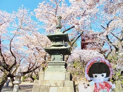 お寺の桜7