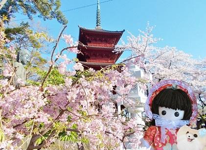 お寺の桜6