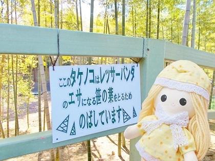 レッサーパンダちゃんの笹