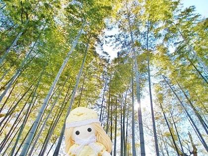 レッサーパンダちゃんの竹林