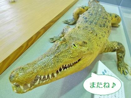 自然博物館のワニさん