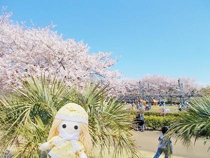 桜の向こうには