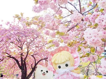 八重桜のハーモニー