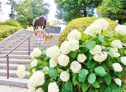 隅田公園 あじさい4