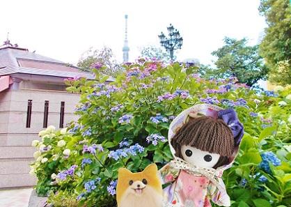 隅田公園 あじさい3