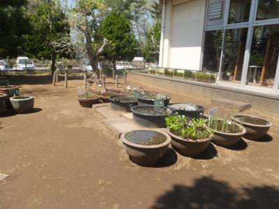 千葉市緑化植物園_(2)_convert_20190413202248