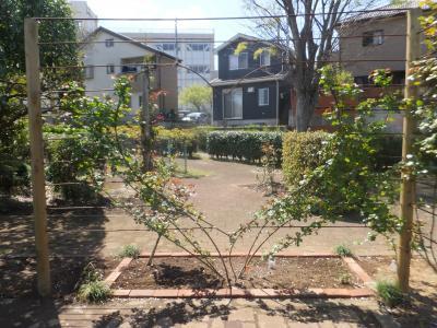 千葉市緑化植物園_(4)_convert_20190413202527