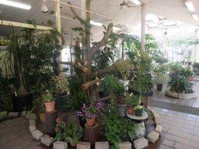 千葉市緑化植物園_(8)_convert_20190413203337