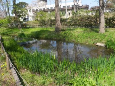 千葉市緑化植物園_(11)_convert_20190413203757