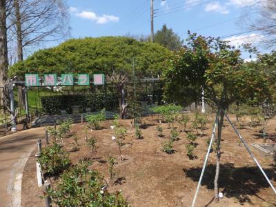 千葉市緑化植物園_(12)_convert_20190413203854