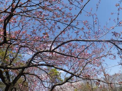 千葉市緑化植物園_(14)_convert_20190413204055