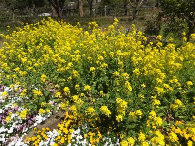 千葉市緑化植物園_(15)_convert_20190413204412