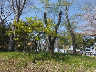 千葉市緑化植物園_(16)_convert_20190413204519