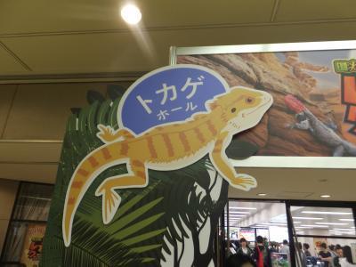 東京レプタイルズワールド2019_(4)_convert_20190519182112
