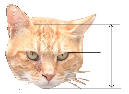 猫の顔比率