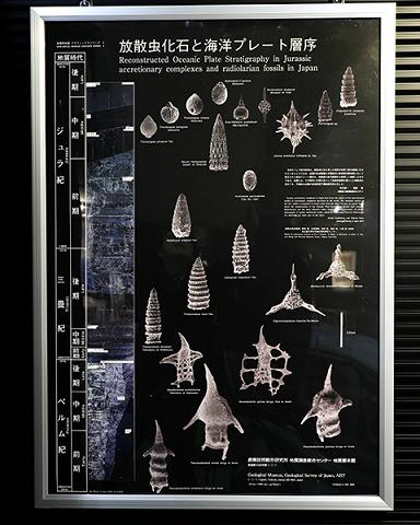 放散虫の層序