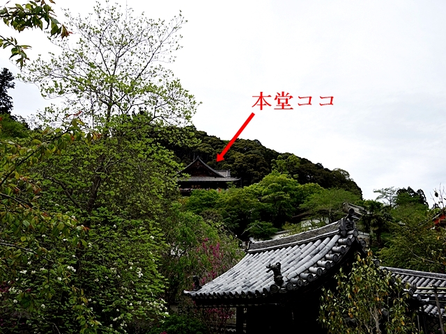 DSC02384-03.jpg
