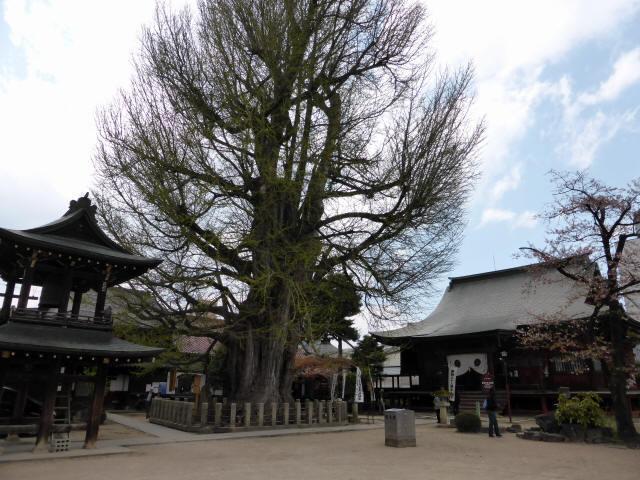 飛騨国分寺21