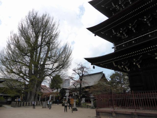 飛騨国分寺31