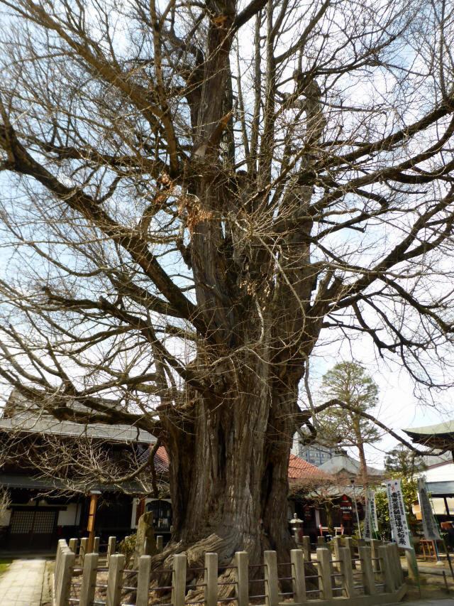 飛騨国分寺34