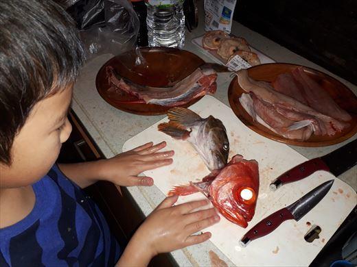 魚を捌く (16)