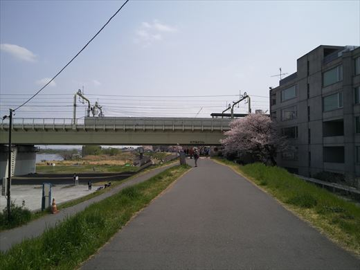 多摩川パンコイ (10)