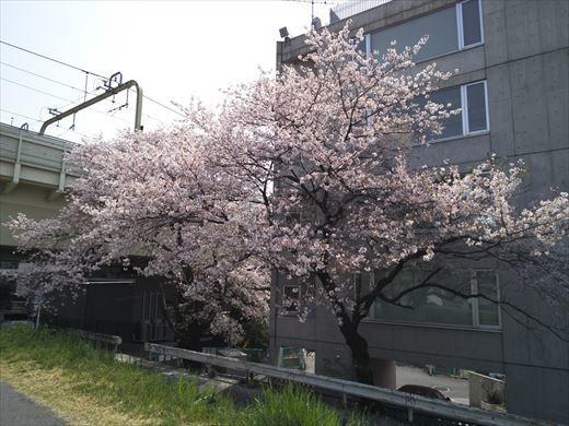 多摩川パンコイ (11)