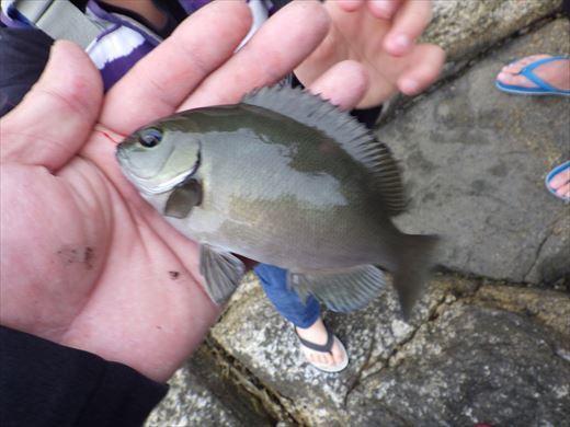 神津島の磯釣り (21)