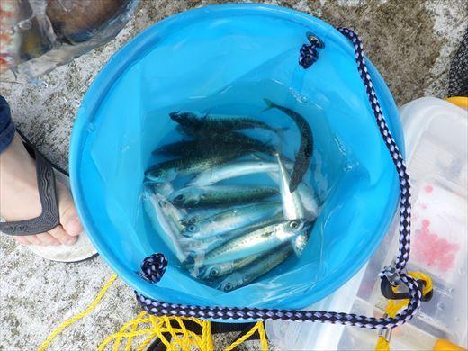 神津島港釣り1 (24)