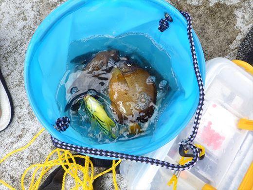 神津島港釣り1 (25)
