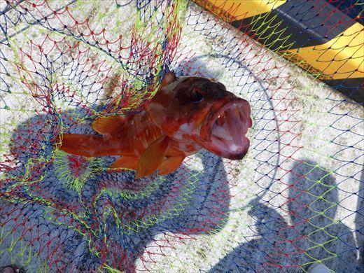 神津島港釣り1 (31)