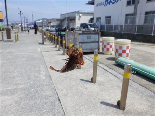 城ヶ島釣り (26)