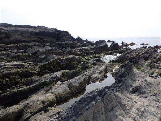 城ヶ島釣り (38)