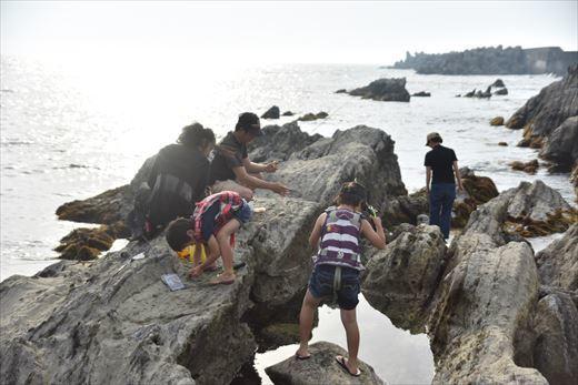 城ヶ島の潮だまり (2)