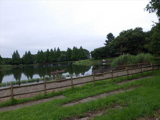松伏総合公園 (5)