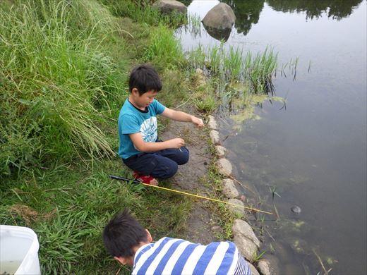松伏総合公園 (19)