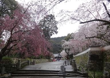 三井寺 その11