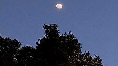 上三川町本郷台の月